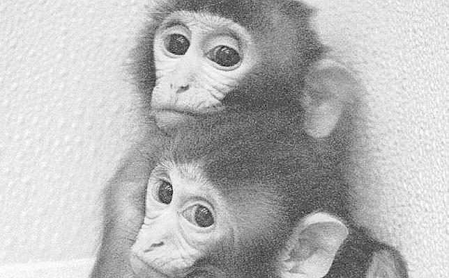 Científicos aconsejan a los bancos que aprendan de los macacos