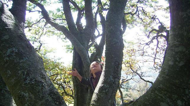 Las Bosquescuela se instalan en entornos natualres