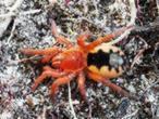 Descubren 169 nuevas especies en la Amazonía