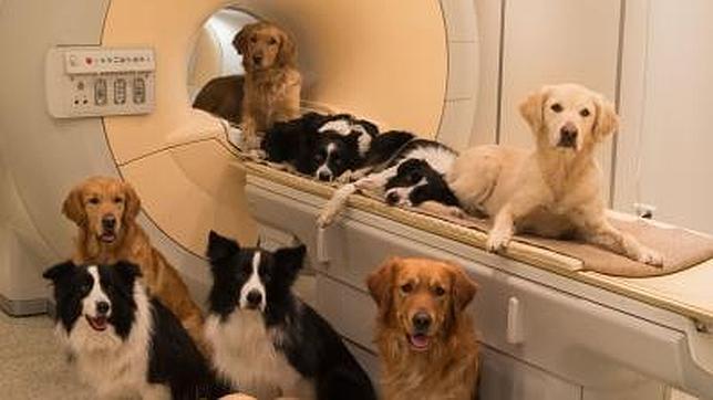 Revelada una similitud cerebral entre perros y humanos