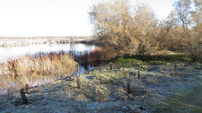 La Confederación Hidrológica del Tajo restaura el río en Aranjuez