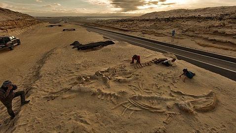 Arqueología y Paleontología Ballenas-carretera--478x270