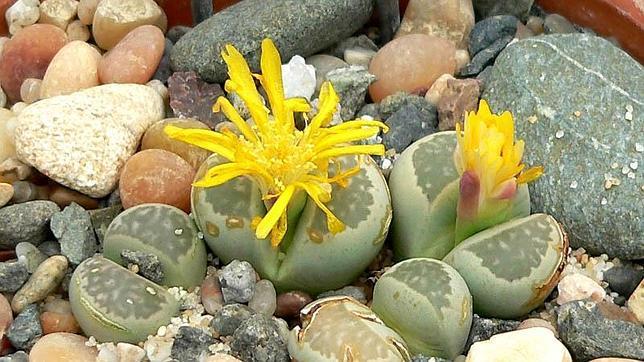 Diez flores que no son lo que parecen