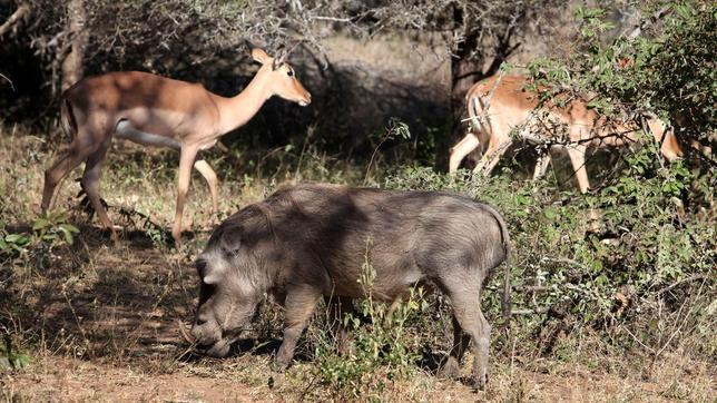 Los grandes herbívoros protegen la biodiversidad en las praderas sobrefertilizadas
