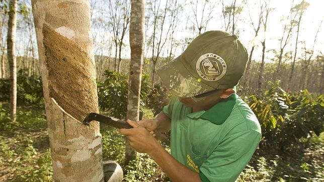 Asia-Pacífico está fallando en detener la deforestación, advierte Naciones Unidas