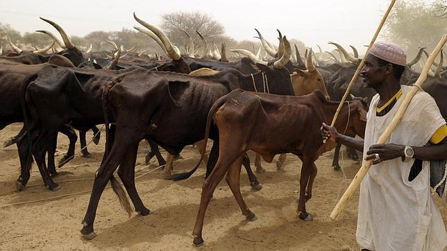 La sangrienta lucha por las zonas de pastoreo africanas