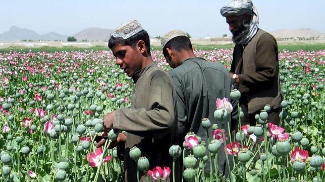 La ONU aboga por despenalizar el consumo de drogas pero sin legalizarlas