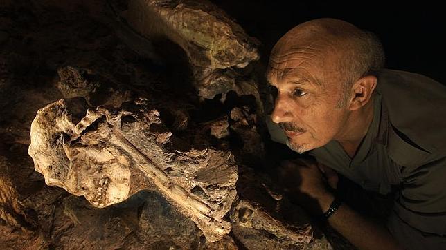 «Little Foot», el australopiteco que pugna por ser nuestro antepasado