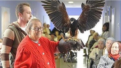 El águila que ayuda a los enfermos de Alzhéimer a recuperar sus recuerdos