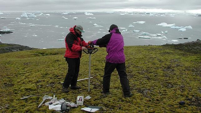 Un musgo congelado en la Antártida durante 1.500 años «resucita» y sigue creciendo