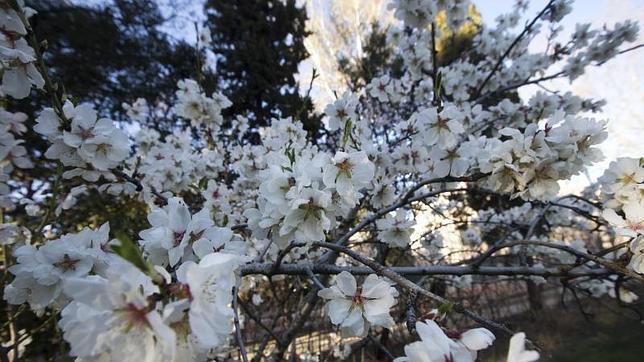 Por qué la primavera comienza el 20 de marzo