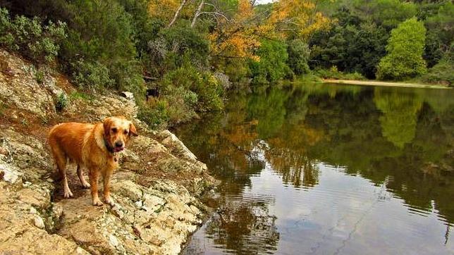 Rutas para familias con perros por navacerrada - Casas rurales que admiten perros en galicia ...