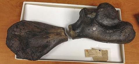 La tortuga monstruosa que tardó 165 años en mostrarse