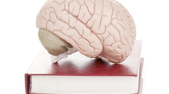 Cinco refranes que la neurociencia puede explicar