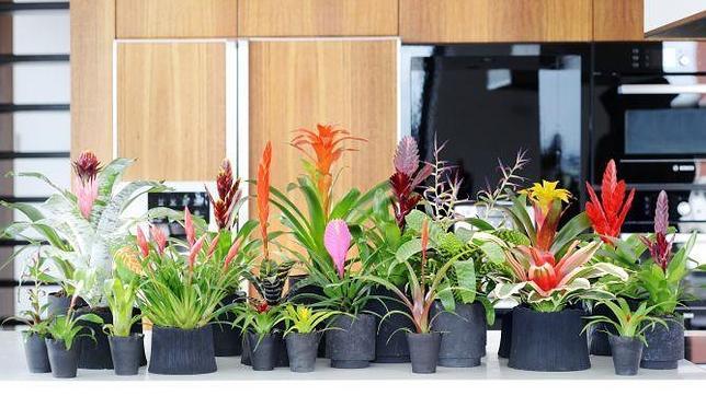 Las plantas de interior más bonitas para alegrar nuestra casa