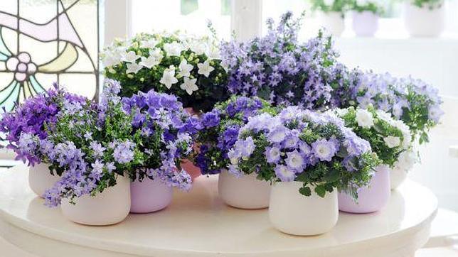 Las plantas de interior ms bonitas para alegrar nuestra - Plantas bonitas de interior ...