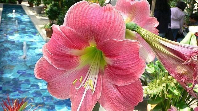 Zabalaaldia el blogger 1 de farandula en new york for Las plantas mas bonitas
