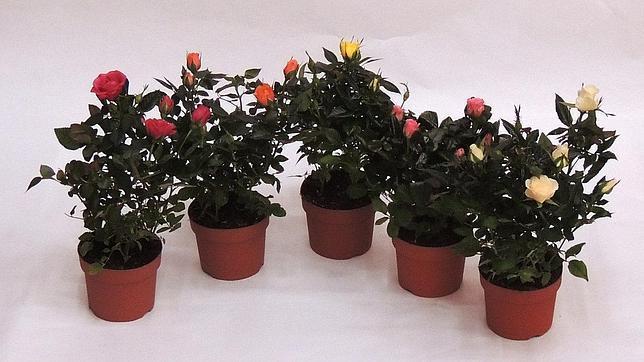 Las plantas de interior ms bonitas para alegrar nuestra for 10 plantas de ornato