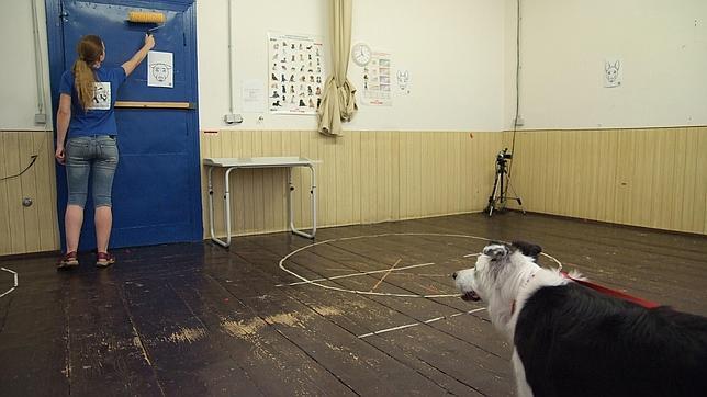 Los perros, más interesados por los humanos con objetos que por los objetos en sí mismos