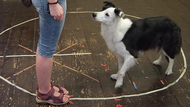 Uno de los perros que participaron en el estudio