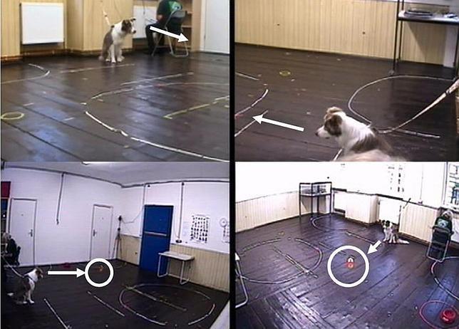 El primer experimento realizado con los perros