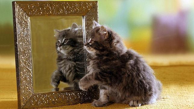 Por qu los gatos no se reconocen en un espejo for Espejo que no invierte la imagen