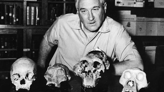 Homo habilis, un enigma 50 años después
