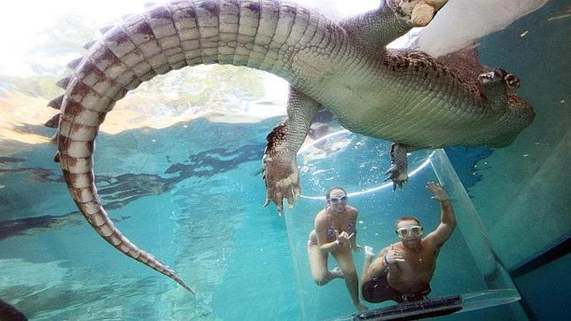 La «jaula de la muerte»: 15 minutos en el agua con un cocodrilo gigante
