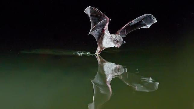 El raro murci lago pescador del mediterr neo - Fotos de peces del mediterraneo ...