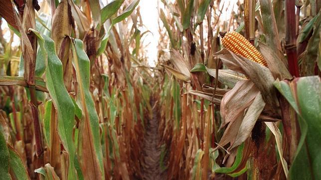 Los biocombustibles son más perjudiciales que la gasolina a corto plazo en términos climáticos