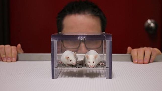 El olor a hombre estresa a los ratones (¡pero no el de las mujeres!)