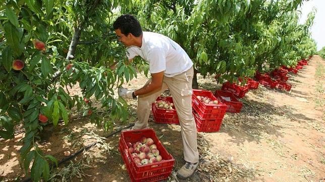 Trabajo recogida de fruta 2019