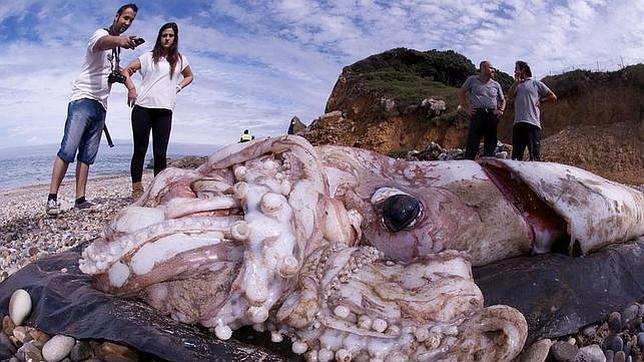 ¿Qué hay de verdad en la leyenda del kraken?