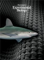 El poder de la piel de tiburón, revelado