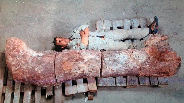 Paleontólogos argentinos aseguran haber descubierto el dinosaurio más grande del mundo