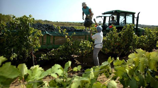 Resultado de imagen para cosecha de uva