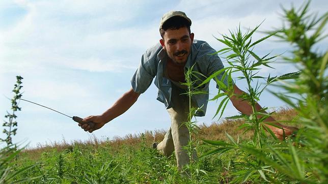Los estragos ecológicos que está causando el cultivo de cannabis en Marruecos