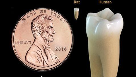 Luz que regenera los dientes
