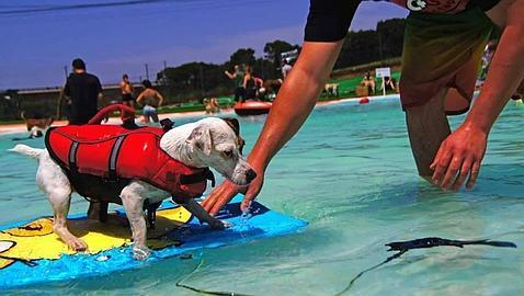 Abre el primer parque acu tico de espa a solo para perros for Piscinas con toboganes en barcelona