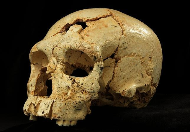 Atapuerca esclarece el origen de los neandertales