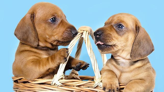 Pólizas de seguro para cuidar la salud de tu perro, ¿moda o necesidad?
