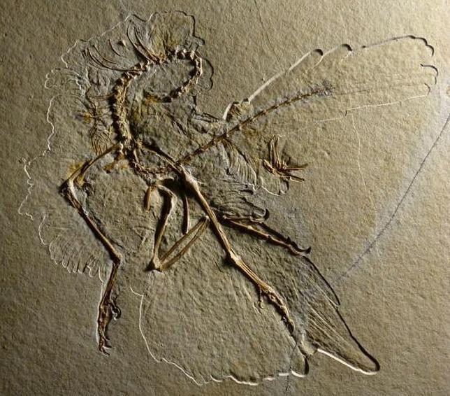 La primera ave llevaba un «pantalón de plumas»