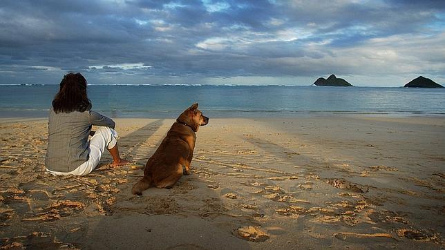 Cada vez más playas admiten la presencia de mascotas