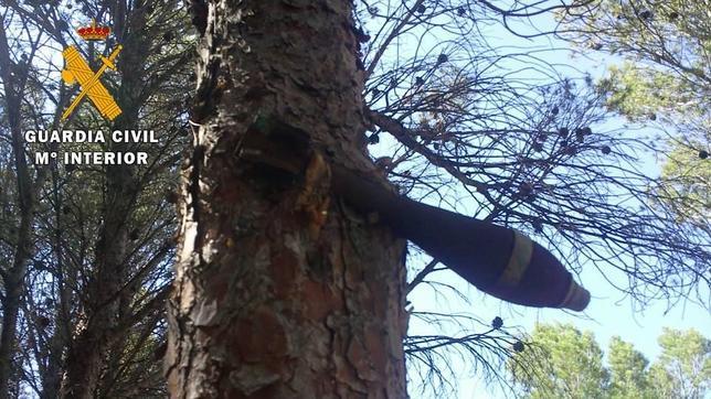 Una bomba de la Guerra Civil ha estado colgando de un pino durante 75 años