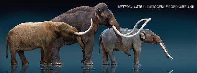 Tres ancestros de los elefantes: el mastodonte, el mamut y el gonfoterio