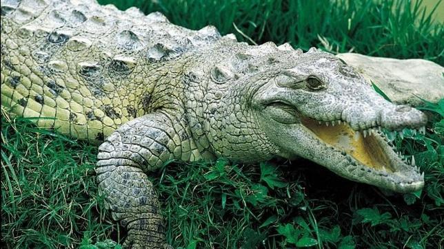 Un alcalde mexicano se casa con un cocodrilo