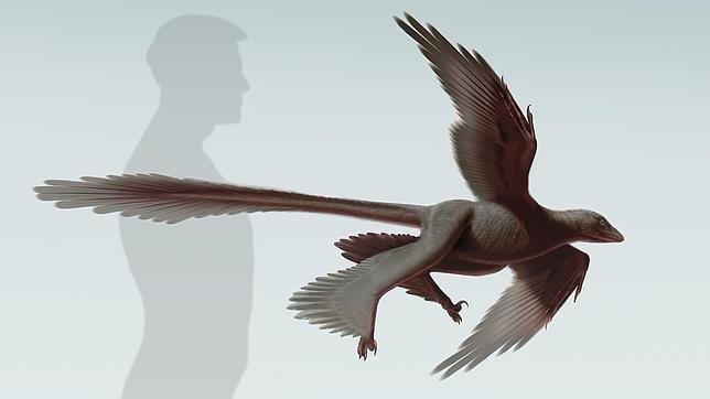 Ilustración del dinosaurio con plumas recién descubierto, el Changyuraptor Yangi, en la que se aprecia su tamaño