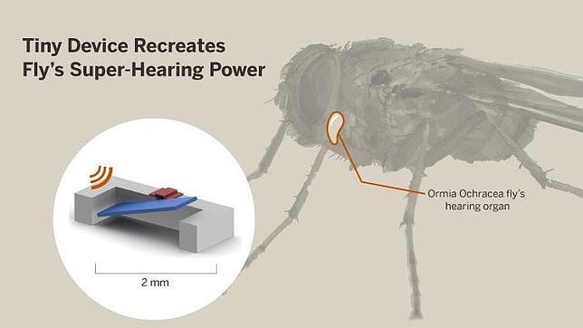 El oído de la mosca inspira los detectores de sonido del futuro