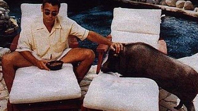 La Policía Municipal lamenta la fiebre por tener un cerdo vietnamita, como George Clooney