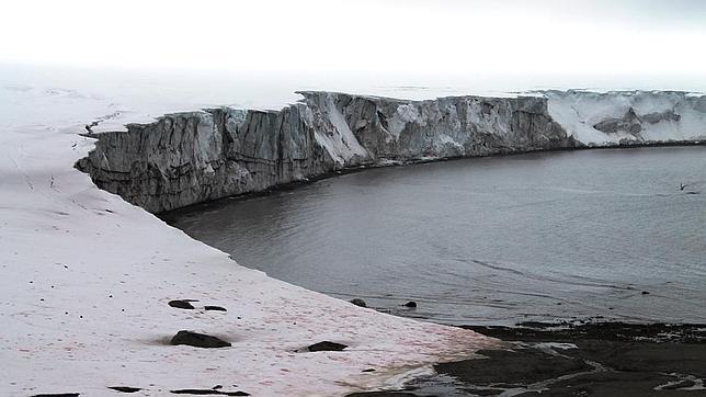 Solo el 0,4% de la superficie de la Antártida se considera zona desglaciada